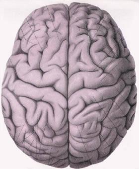 脑细胞及神经组织结构图(一)